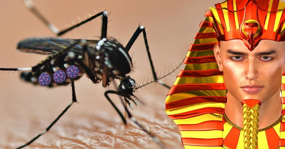 West Nile Virus and mosquitoes: Don't panic!