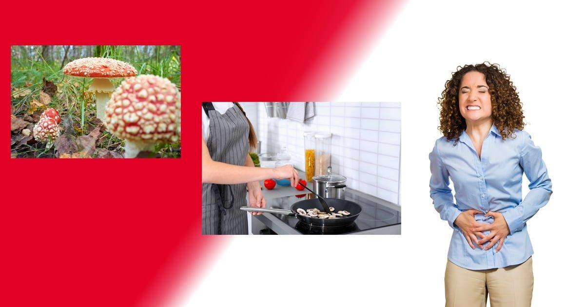 L'intossicazione da funghi: come prevenirla o intervenire