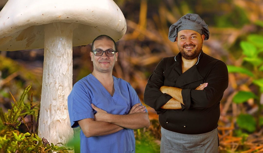 From literature to the table: journey to discover mushrooms in respect to human health