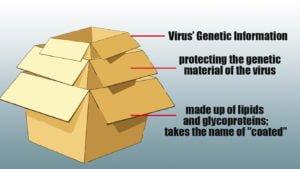 virus-scatole