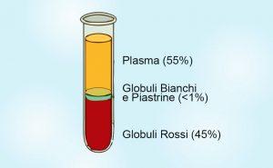 plasma-sangue-composizione