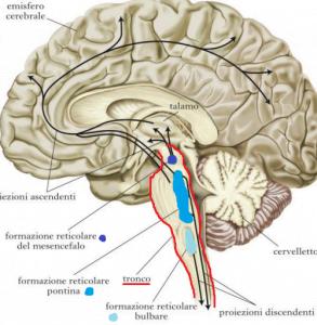 cervello sonno