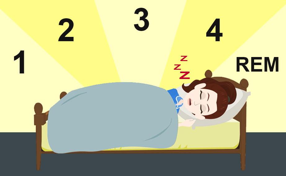 Che cos'è il sonno?