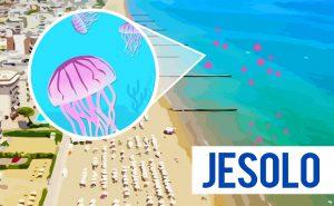 Read more about the article Puntura di medusa a Jesolo