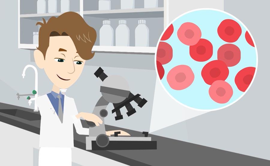 I globuli rossi o eritrociti