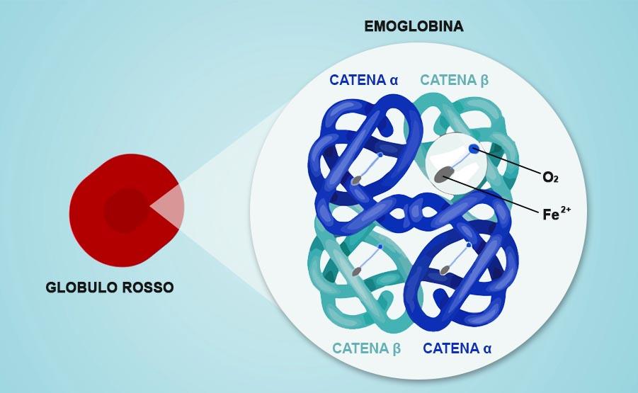 emoglobina globuli rossi