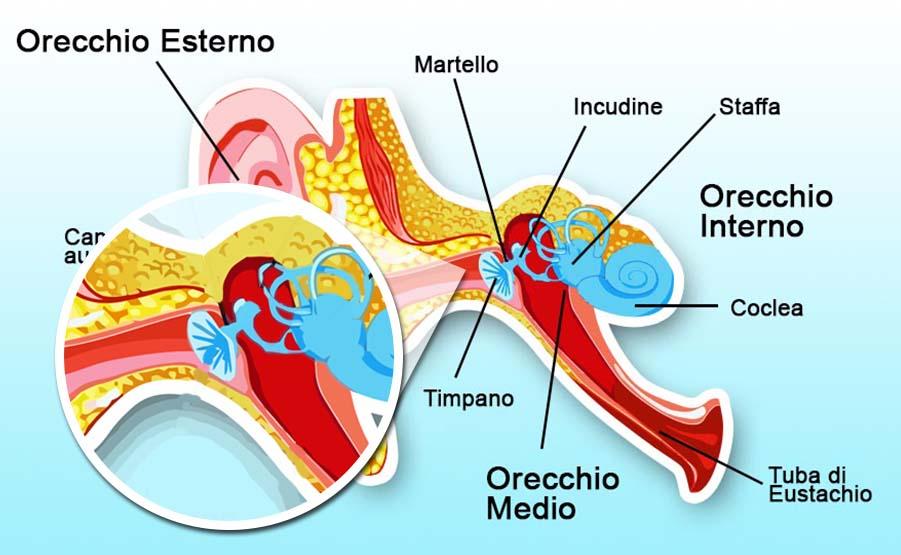 Esame dell'orecchio: orecchio medio