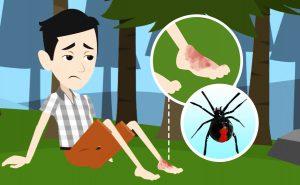 Morso di ragno vedova nera: cosa fare